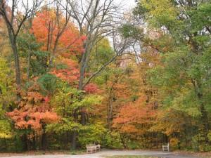 gezondheidstips herfst